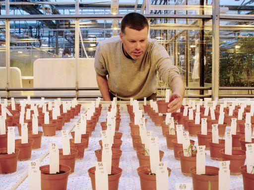 Ученые признали съедобными выращенные «марсианские» овощи