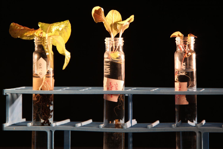 Ученые изучают возможность растить растения наМарсе