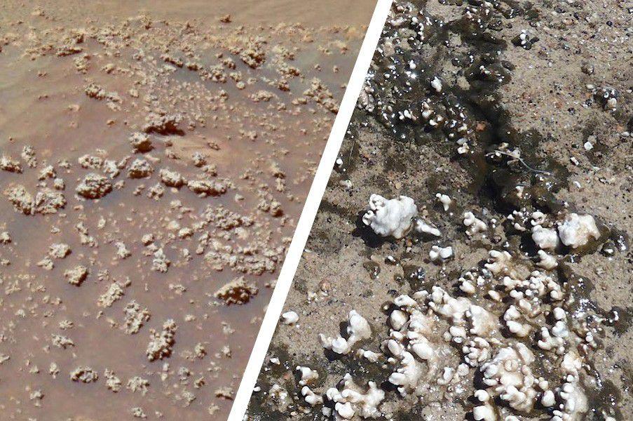 Свидетельства жизни наМарсе ученые NASA могли терять