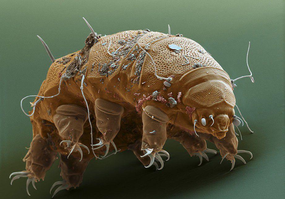 Ученые назвали самое выносливое животное, способное дожить до«конца света»