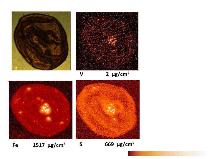 Внеземную жизнь новый марсоход будет искать пованадию